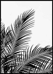 Silhouette Palm Tree